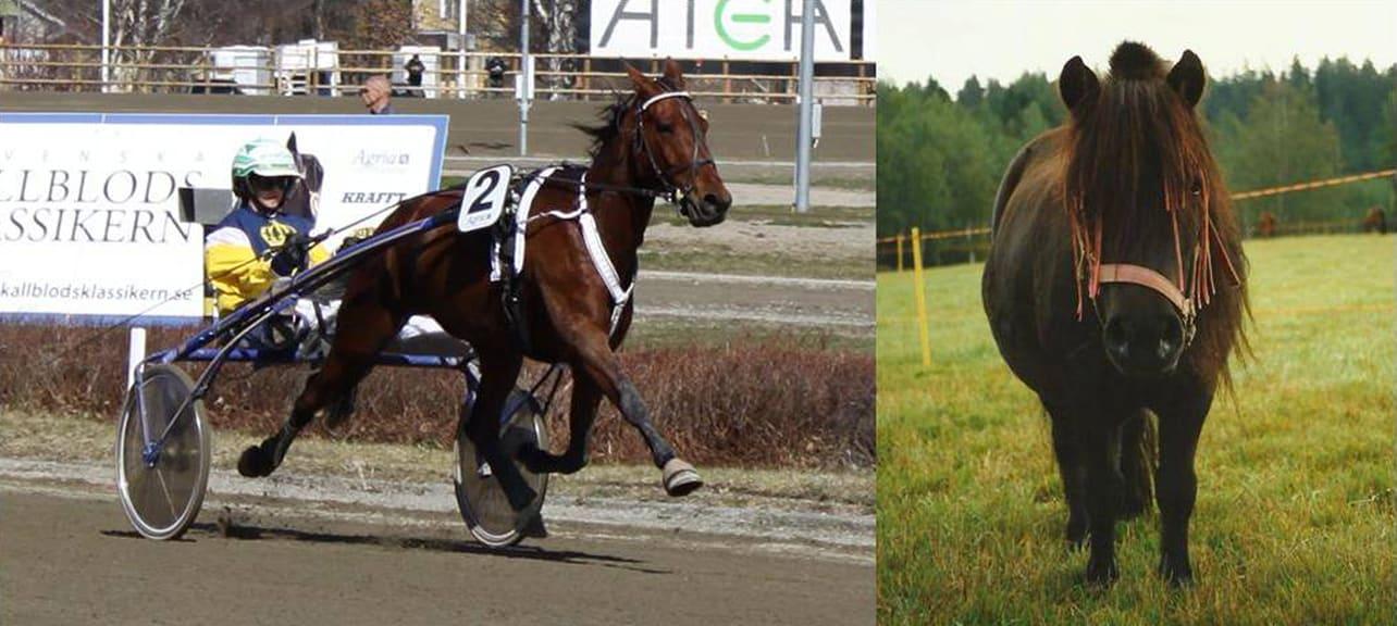 Bilden visar två olika typer av hästar, en högpresterande atlet och en mindre ponny som inte gör mycket arbete.
